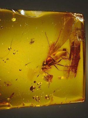 янтарь с комаром