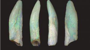 Опализованные зубы динозавров найдены в Новом Южном Уэльсе