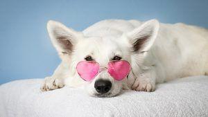 Calla Gold: Собаки в ювелирных изделиях: ювелиры украшают своих собак