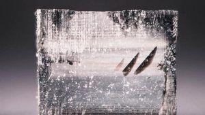 Алмазная компания Aether добавляет в свой совет директоров бывшего исполнительного директора Tiffany & Co.