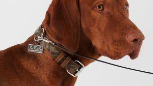 Дизайнерские ошейники для собак, которые вы можете приобрести для своего питомца