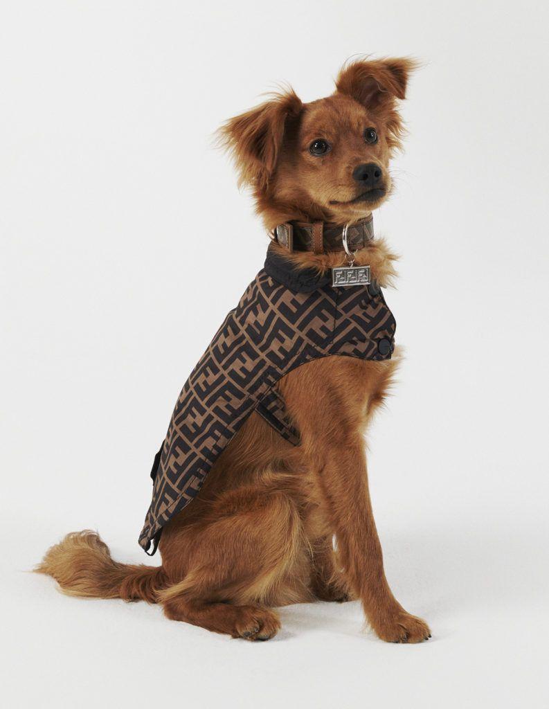 Дизайнерские ошейники для собак