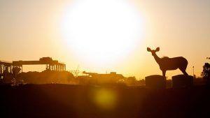 Anglo American: De Beers возвращается к прибыли на фоне восстановления рынка